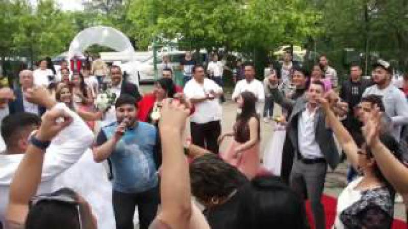 Danut Ardeleanu Manele live nunta Pitesti 2016 Video