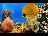 POSITIVE FOR CHILDREN, BEAUTIFUL UNDERWATER WORLD, WATER SOUNDS