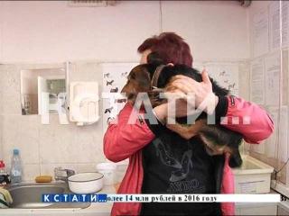 Бешенство в городе - хозяева домашних животных выстроились в очередь за вакцинацией