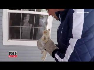 Воскрес из мёрзлых: волшебное спасение замерзшего котенка, не подававшего признаки жизни.