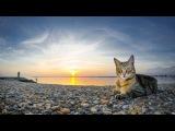 Песня - ВСПОМНИ МЕНЯ  Кай Метов - вспомни меня  Лучшая песня всех времён  Кошки и ...
