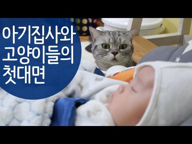 귀여운 아기와 고양이들의 첫만남 Cats First Encounter with a Baby 赤ちゃんと猫たちの初の出202