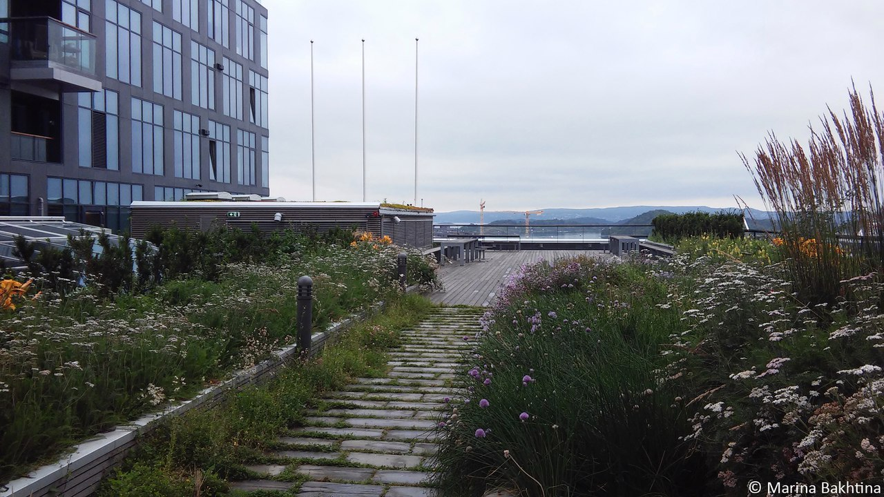 15 Green roof in Oslo / Barcode project – KLP Bygget