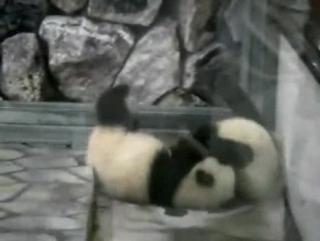 Кунфу-панда-фри стайл!!!