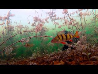 Зимняя рыбалка 2015 с подводной камерой. Первый последний лед