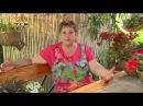 Бальзамин и бегония - Цветочная лавка