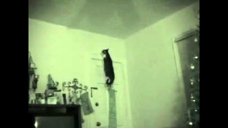 Кот гоняется за призраком