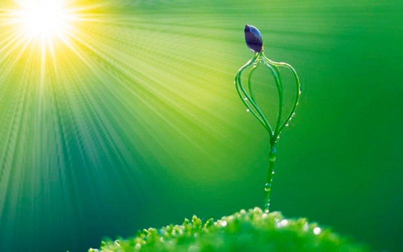 Свет в жизни растений. Признаки избытка или недостатка света