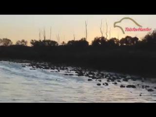 Охота с подхода на утку (ЖЕСТЬ-2)
