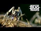 Dinosaur Ants vs Trap Jaw Ants MONSTER BUG WARS