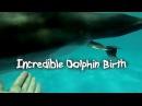 Incredible Dolphin Birth in dolphinarium Nemo. Невероятное событие - Роды в воде - Дельфины