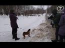 В тульском парке проверили, как выгуливают собак