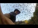 Огромная стая летучих мышей отправляется на охоту