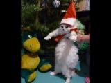 Коты, которые уже сыты по горло праздниками (cats got tired of New Year)