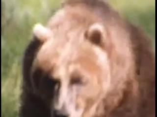 Медведь напал на женщину_нападение медведя на человека_2015_убийца_растерзал_жесть_ужас_ онлайн (1)