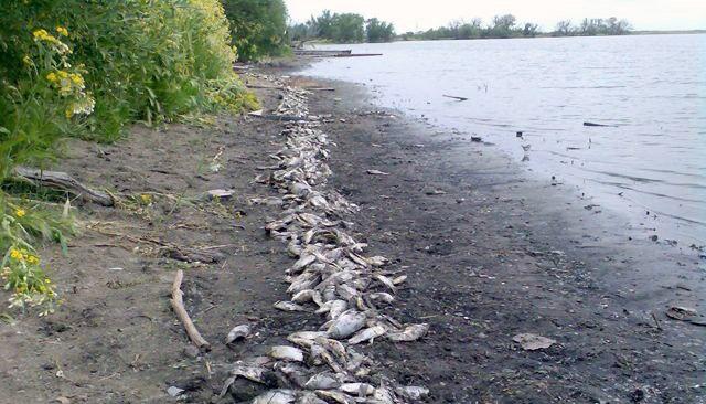 Ветеринарные врачи проводят проверку эпизоотического состояния реки Кадамовки