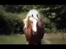 Тинкер Ирландский коб Красивая порода лошадей The Irish Cob the Gypsy Horse Gypsy Vanner