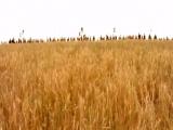 Тарас Бульба - Гуляй поле Любо, братцы, любо