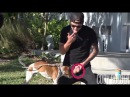 DOG LICKING BALLS PRANK! (FT TWINZTV)