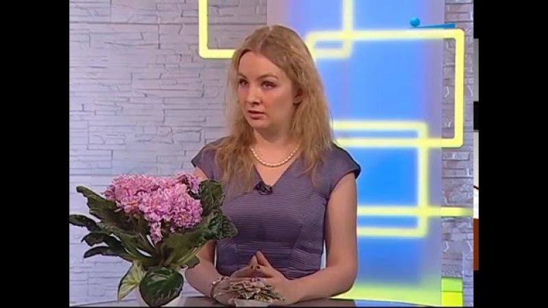 Передача Беседка с Полиной Кордик о фиалках гигантах и миниатюрах