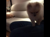"IL , hongstower on Instagram: ""프리 까미 스컬 귀여워 ㅠㅠㅠ #강아지 #고양이"""