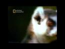 «Дикий секс: Броская самореклама» (Документальный, животные, 2005)