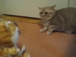 Кот боится игрушки