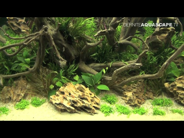 Planted aquariums of Heimtiermesse 2015, Hannover - part 10