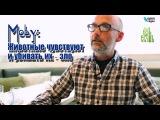 Moby: Животные чувствуют боль и убивать их - зло (русская озвучка)