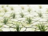 SHIZA Мастер Муши (2 сезон) Mushishi Zoku Shou TV2 - 7 серия SakaE &amp NesTea 2014 Русская озвучка