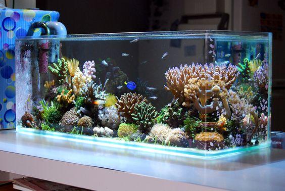 казалось декор для аквариума купить в москве семенники земноводных