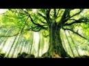 Мистические тайны растений.Зелёный разум планеты.Обманутые наукой
