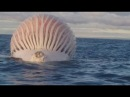 Тушу кита рыбаки приняли за корабль пришельцев