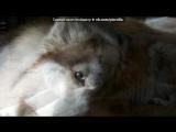 Картинки и статусы. под музыку SamoL feat. A-Sen - Малиновые сны. Picrolla