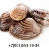 Сахалинские Морепродукты Краб камчатский Трепанг