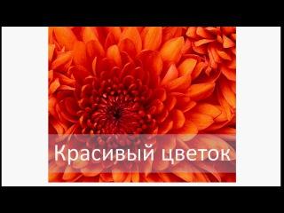 Как вставить текст на картинку или фото используя Ворд – Microsoft WORD 2010
