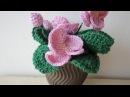 Комнатная фиалка ч-3 Crochet Violet Room р-3