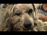 Этого бродячего пса забрали с улицы. Но когда его побрили, все были в шоке!