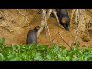 Неизведанные острова 2-й сезон 2-я серия. Речные острова Амазонии - Заливной лес / Wildest Islands (2013) HD 720p