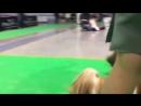 Екатеринбург 06.12.15 монопородная выставка ши-тцу экс. Чистякова Л.