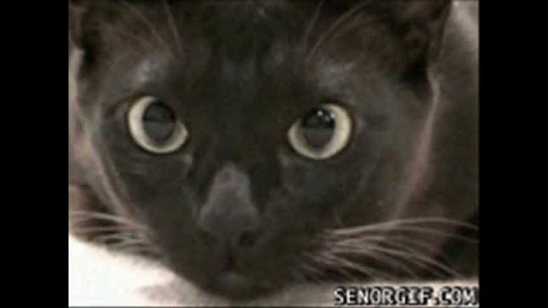 Приколы с кошками: Кошки - очарование моё. The collection of tricks with cats: Cats - my charm