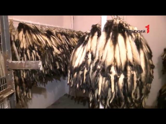 Пушное, Тульская область, норка, лисица, хорь. Как тульские зверохозяйства выживают в условиях падения рынка?