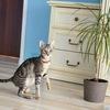Сококе (соукок)-кенийская лесная кошка