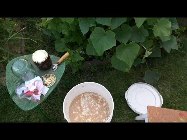 ДРОЖЖЕВАЯ ПОДКОРМКА - подкормка растений - рецепт дрожжевой подкормки от Клематис TV