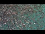 рыба в озере Чео Лан