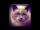 ♫ Песня про чёрного кота - Жил да был, чёрный кот...