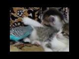 Попугай разговаривает с котятами