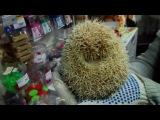 Win-Hedgehog  Win-Ёжик