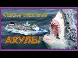Топ 5. Самые большие акулы в мире
