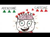Как ведет себя мозг под кофе